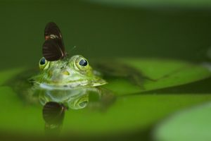flog in water